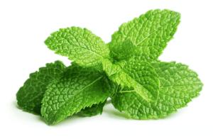 Mint helpful in anaemia