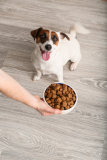 Top Dog Foods in Canada